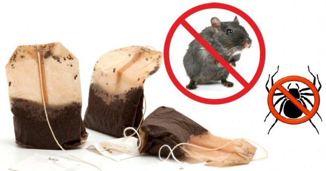 Wenn man einen Teebeutel benutzt, wird man nie wieder Mäuse oder Spinnen im Haus haben.