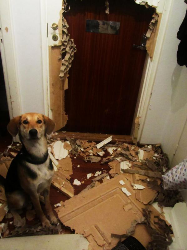 Diese 32 Hunde begehen gerade DEN Fehler ihres Lebens. Das Resultat ist zum Schreien!