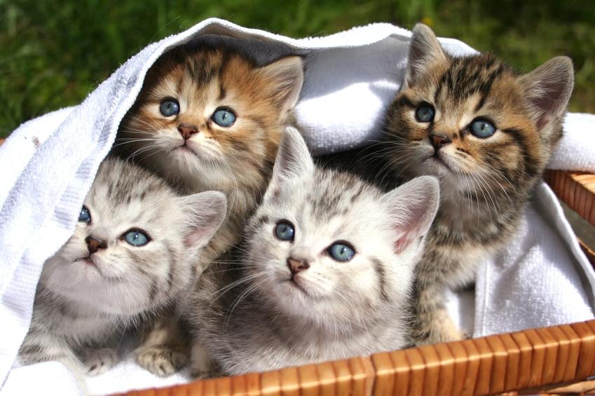 Was die Katze alles kann