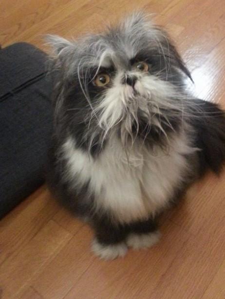Das Internet rätselt, ob das Tier Hund oder Katze ist – Besitzer decken auf.