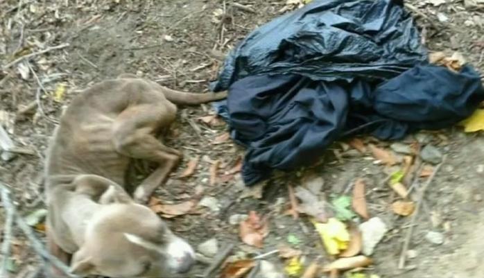 Ein Polizist wirft seinen Hund einfach in den Müll – aber ein kleines Detail verrät ihn jedoch!