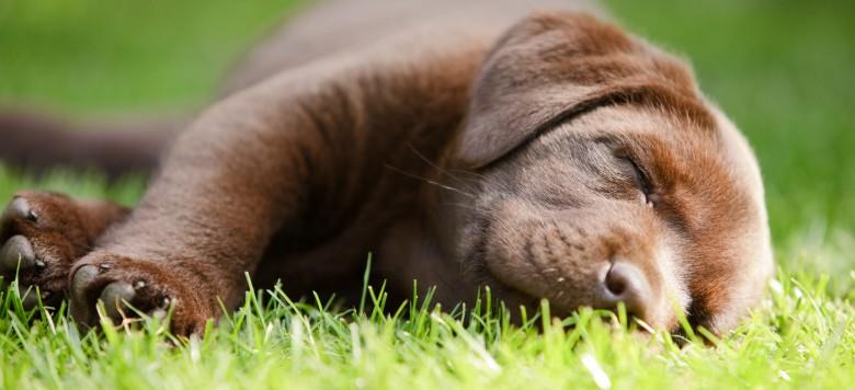 Traurige Geschichte – Hund Zozo liegt täglich auf dem Grab seines verstorbenen Herrchens!