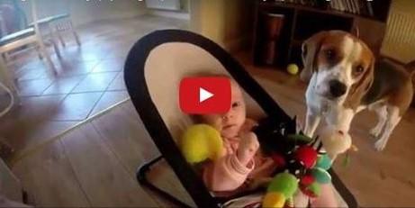 Video: Hund klaut Baby Spielzeug: Seht hier wie er sich dafür entschuldigt!