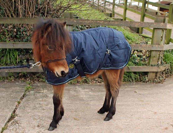 Das Pony freundet sich mit einem Teddy an und die Bilder lassen Herzen schmelzen.