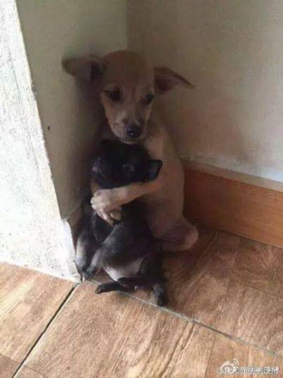 Die beiden Straßenhunde können nicht aufhören, sich zu umarmen. So wurden sie endlich gerettet.
