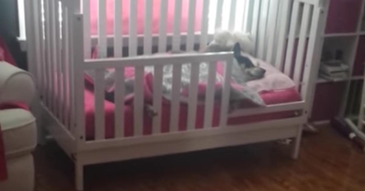 Entzückte Mutter filmt, wie sie Schäferhund neben ihrem Baby im Bettchen findet.
