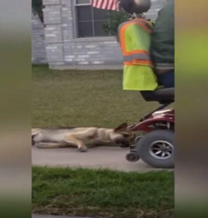 Mann schleift seinen Hund hinter seinem Rollstuhl her!