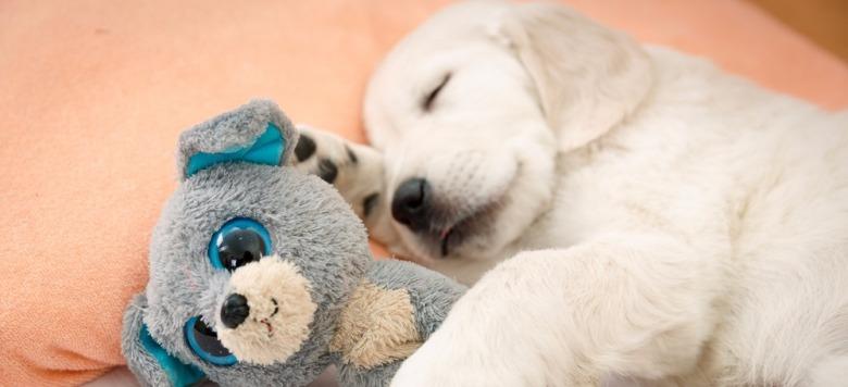 Video: Welpe besänftigt älteren Hund, als er merkt, dass dieser einen schlechten Traum hat!