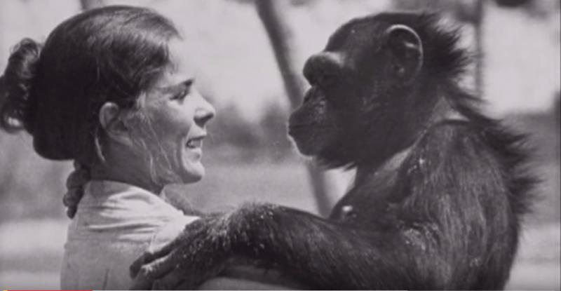 Niemals wird der Affe vergessen, was diese Frau getan hat. Nach 18 Jahren treffen sie sich wieder.