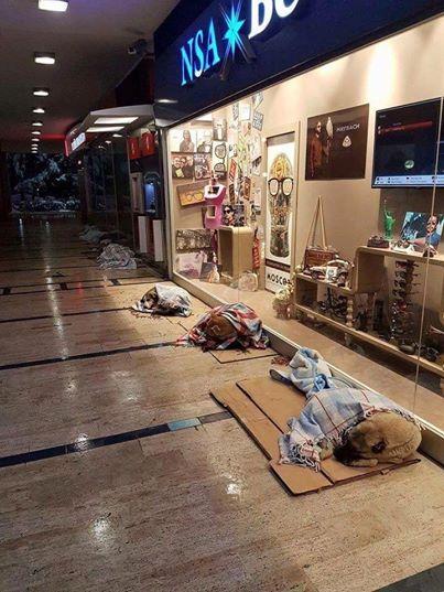 Die Hunde drängen sich auf Pappkartons vor dem Schaufenster im Kaufhaus. Der Grund? Mir wird ganz warm ums Herz.