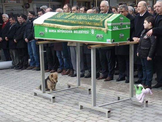 Der Hund setzt sich mit traurigem Blick neben den Sarg. Die Trauernden sind überrascht, was sich als nächstes abspielt.