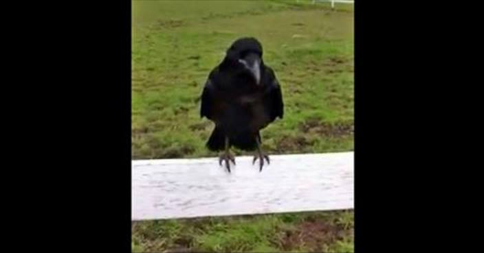 Vogel saß am Zaun und schrie stundenlang – als man realisierte, was er wollte, waren alle beeindruckt!