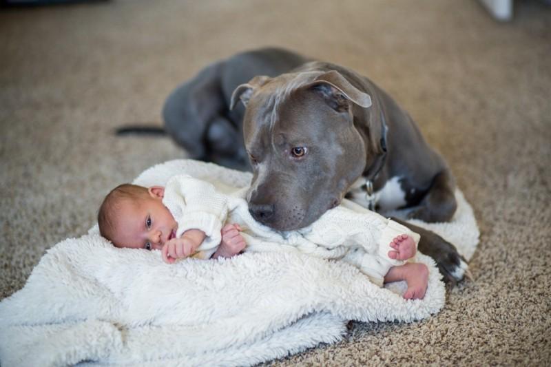 Panisch sah dieser Mann, wie der Pitbull auf sein Baby zustürmte. Aber was er dann erlebte, hat ihn völlig verändert.
