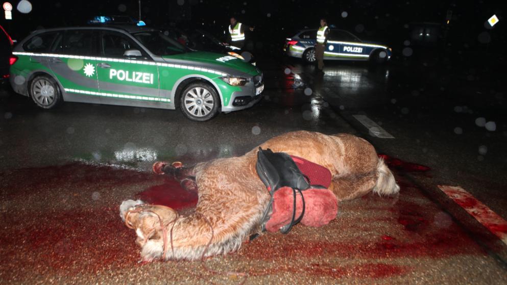 Auto kracht in Reitergruppe: 2 Mädchen schwer verletzt!