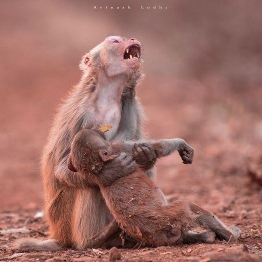 Affenmutti zeigt ihre wahren Gefühle, als sie ihr Baby hält – So rührend!