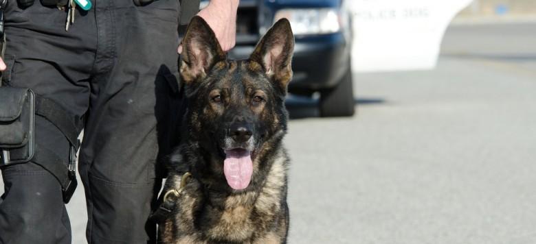 Herzergreifend – Ehemaliger Soldat wird mit seinem Diensthund wiedervereint!