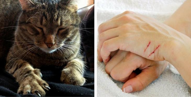 Diese gefährliche Krankheit wird übertragen, wenn eure Katze euch kratzt. So könnt ihr euch schützen