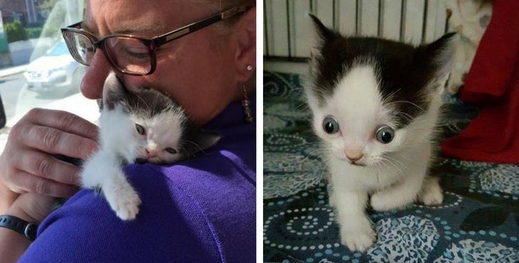 Ein behindertes Kätzchen wird gerettet und stellt sich als wahre Kämpfernatur heraus