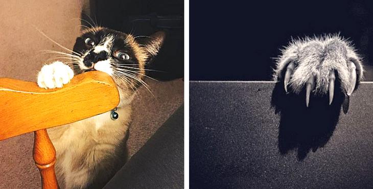 Wie ihr eure Katze davon abhalten könnt, sich die Krallen an euren Möbeln zu wetzen. Ganz ohne Krallenziehen