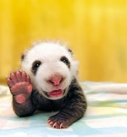16 Beweise, dass Tiere Sinn für Humor haben.