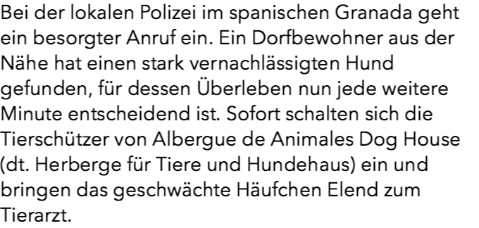 10 Monate Hunger-Haft: Hund aus Klauen von Schindern gerettet.