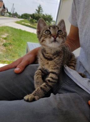 22 Katzen, die die Herzen von Katzenhassern erobert haben.