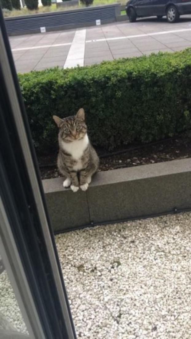 Nachbars Katze wartet höflich auf ihren Freund
