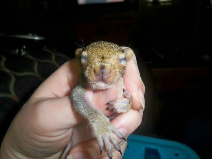 Familie rettet Eichhörnchen – bis es 8 Jahre später zurückkehrt, um ihnen etwas Wichtiges zu zeigen