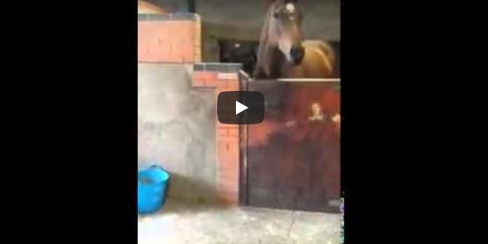 Pferdehalterin tanzt zum Lieblingslied – doch der Blick fällt im Stall auf einmal nicht mehr auf die Frau