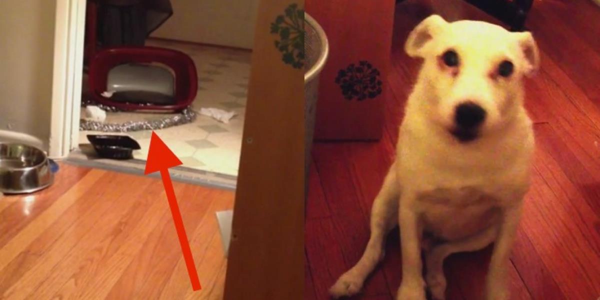 """Dieser Hundebesitzer bricht fast in Lachen aus, als sein """"böser"""" Hund dies tut."""