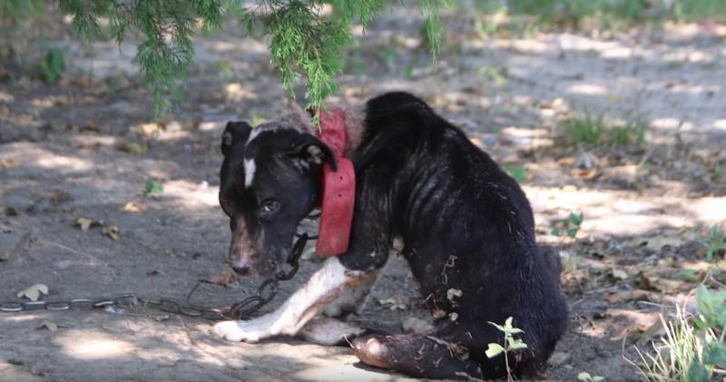 Instinktiv sp rt der hund dass etwas nicht stimmt was er f r sein frauchen tut ist - Gartenzaun fur hunde ...