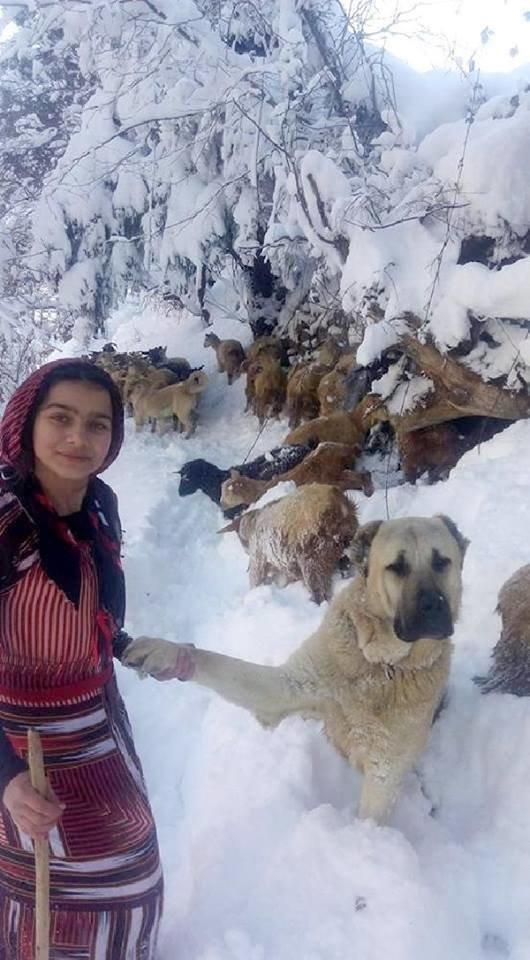 hundespuren im schnee erkennen