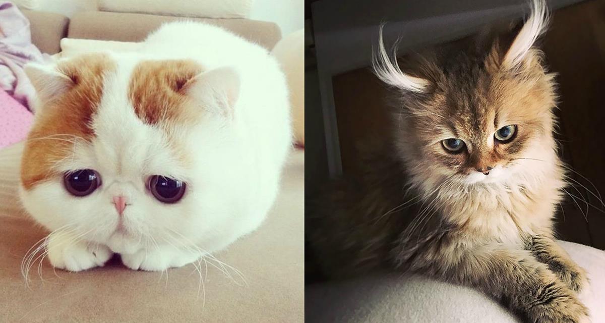 Die schönsten Katzen auf der ganzen Welt... Sie werden Ihnen eine gute Laune garantieren...