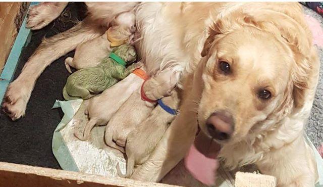 Der Hund der Familie gebärt einen grünen Welpen – unglaublich schön, unglaublich ungewöhnlich