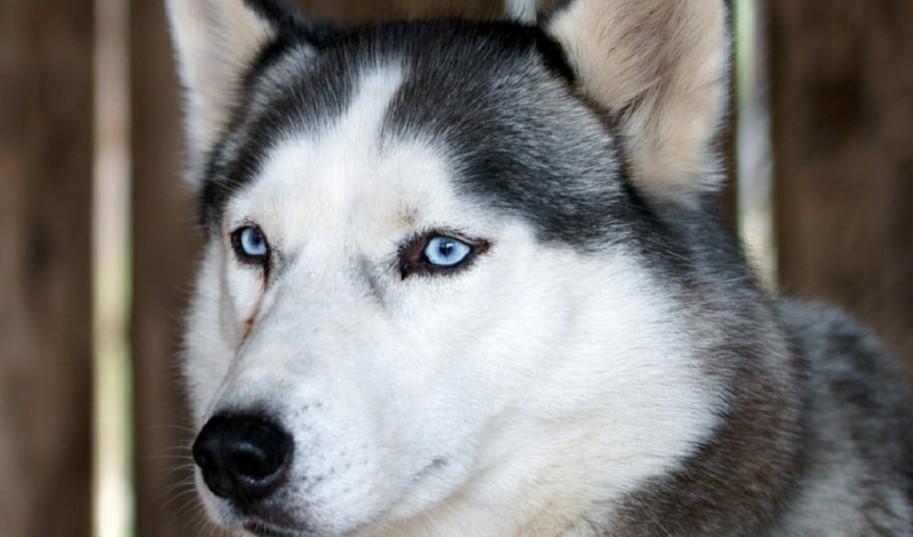 Um dieses Quiz zu knacken, musst Du ein echter Hunde-Experte sein.