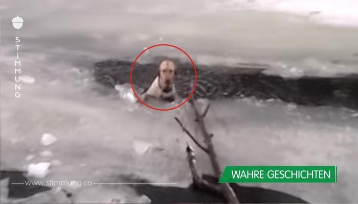 Weinender Hund vor Kältetod in Eiswasser gerettet.