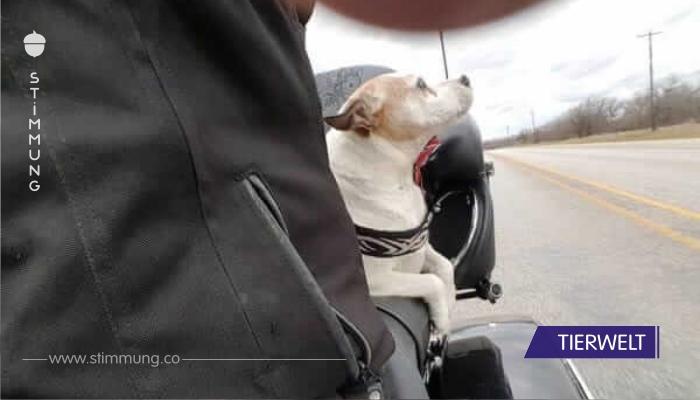 Der Mann warf seinen Hund auf die Straße – dann entschloss sich dieser Biker, ihn zu verfolgen
