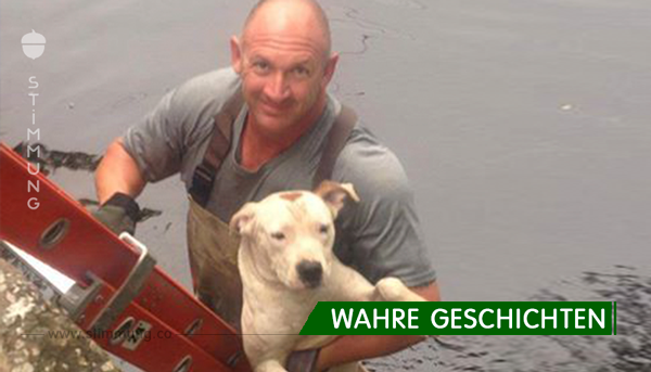 Faszinierend: Seekuh hilft Hund in Seenot.