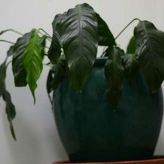 8 Notfall-Tricks für Topfpflanzen.
