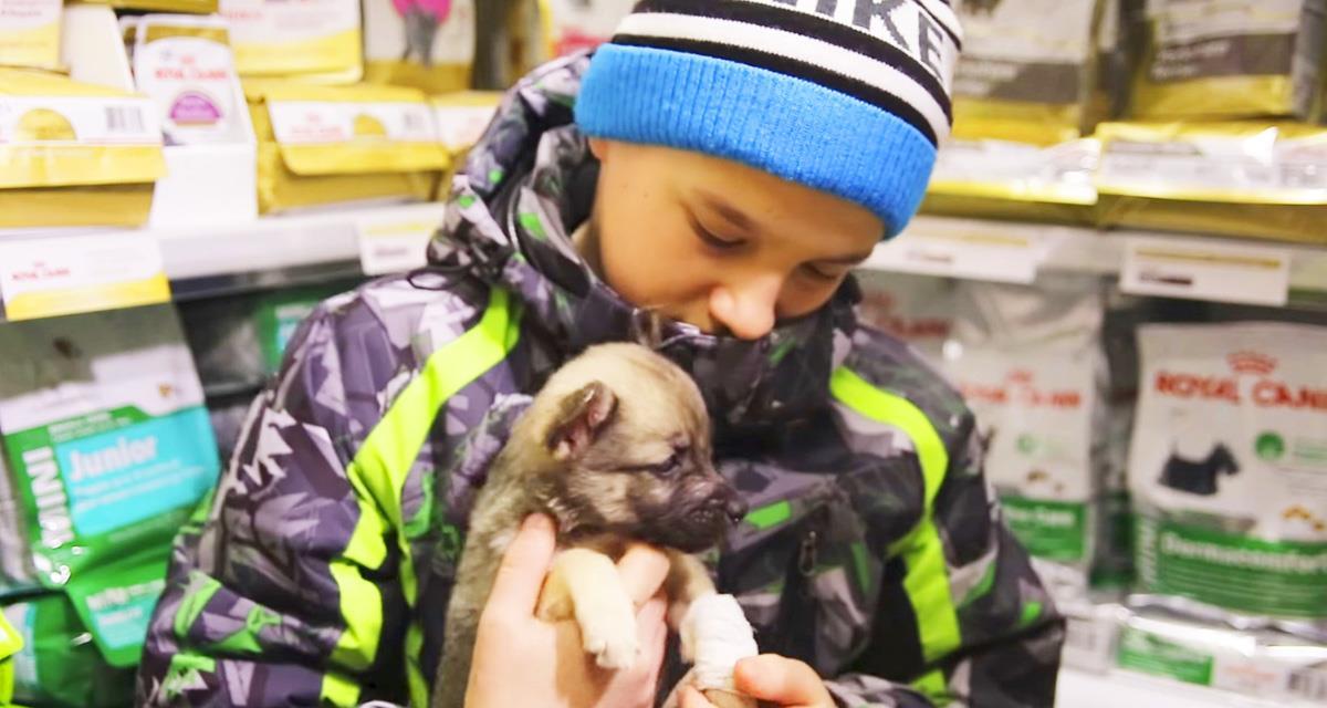Der Junge wollte einen Welpen kaufen, der humpelte und der Verkäufer verspottete ihn. Aber eine Minute später bedauerte er sehr ...