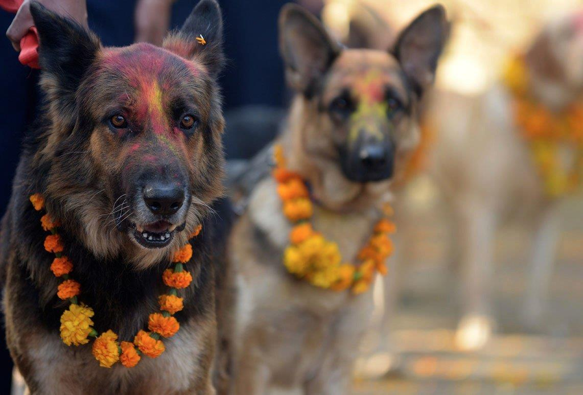 Es gibt jedes Jahr ein Festival in Nepal welches Hunden dankt, dass sie unsere Freunde sind