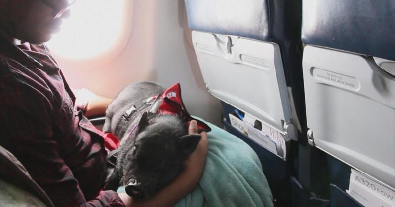15 außergewöhnliche Fluggäste auf Reisen.