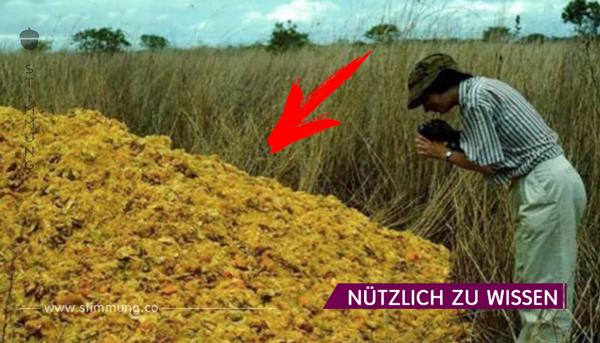 Ein Orangensaft-Unternehmen entsorgte Orangenschalen in einem Nationalpark; 16 Jahre später trauten sie ihren Augen nicht…