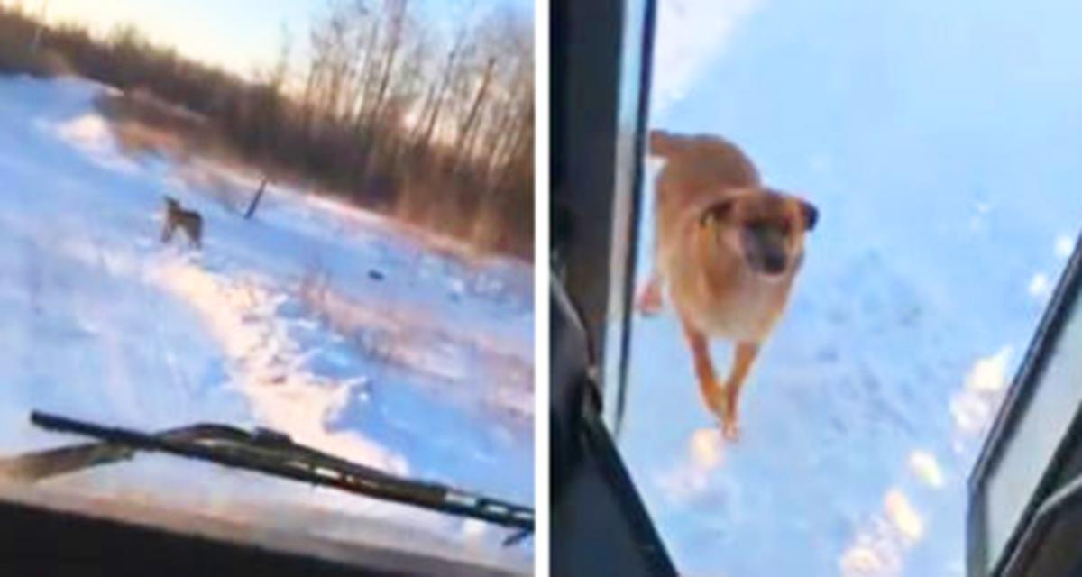 Der Busfahrer hält jeden Tag dort, um den streunenden Hund zu füttern ...