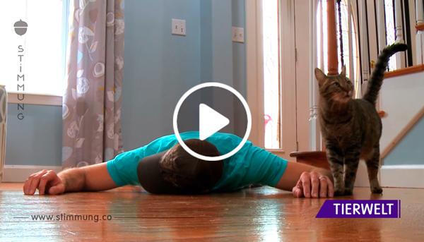 Katzenbesitzer stellt sich tot, um die Reaktion seiner Katze zu sehen – nur damit hätte er nicht gerechnet