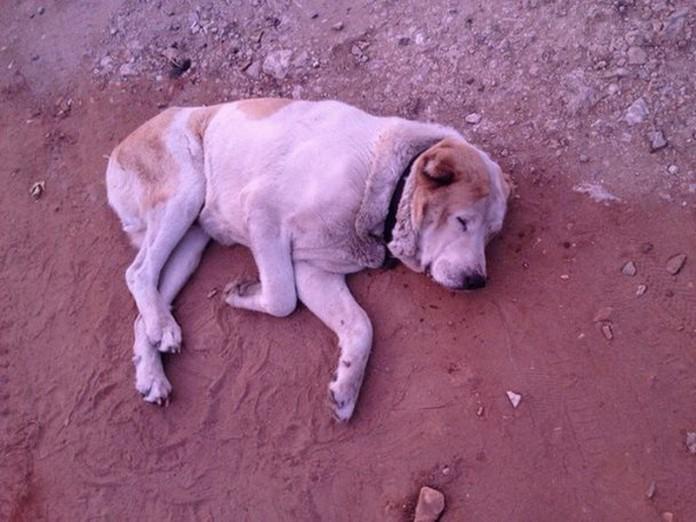 Er lag einfach und starb. Aber dann kam eine freundliche Seele!