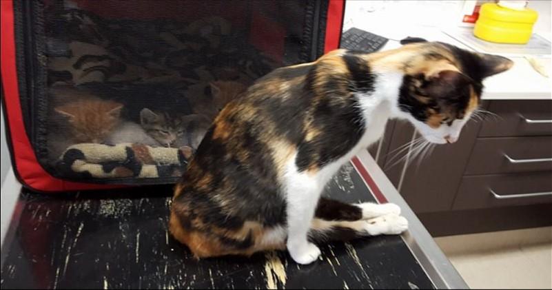Die Katze, die gelähmt war, konnte zu ihren Kätzchen kriechen