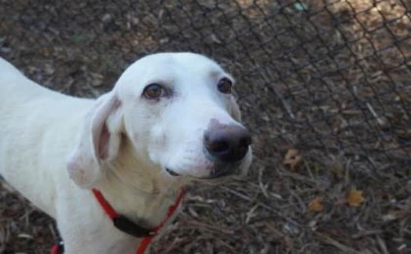 Dieser Hund kam 11 Mal zum Tierheim zurück – bis das Personal realisierte, was er ihnen damit zeigen wollte