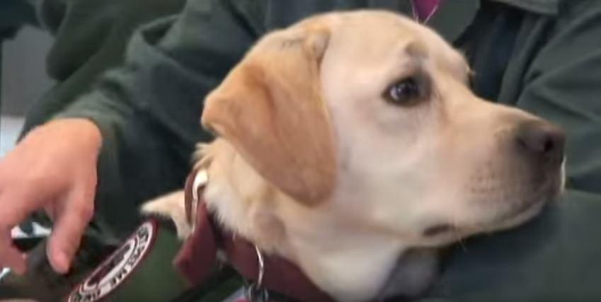 Veteran bringt einen Hund ins Gefängnis – und der rennt sofort auf eine ganz bestimmte Gefangene zu