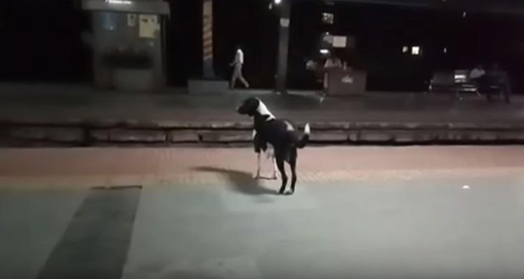 Ausgesetzte Hündin wartet jeden Abend auf ihren Besitzer.